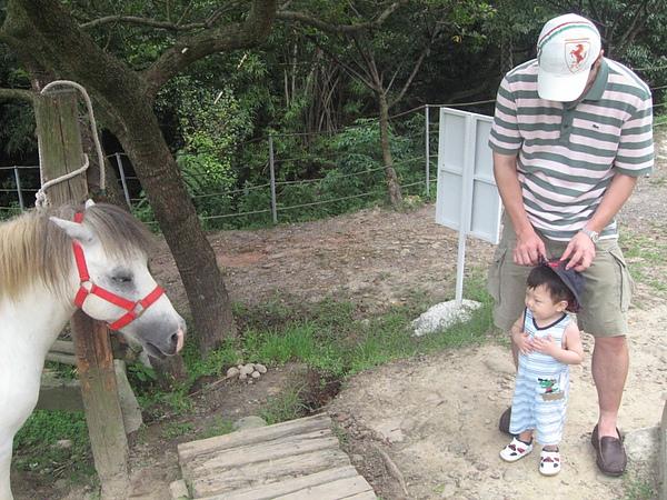 動物-迷你馬3.JPG