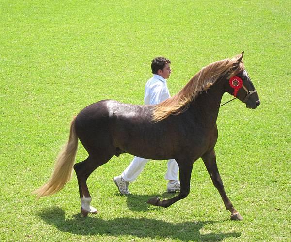 caballo blond 2