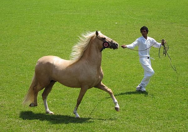 caballo blond
