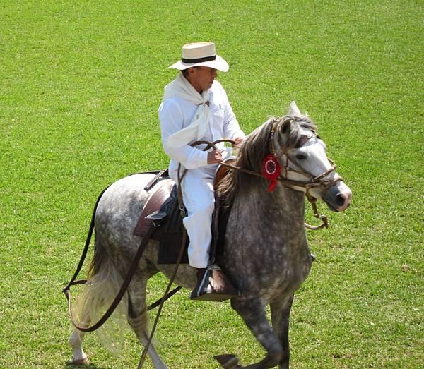 caballo spot