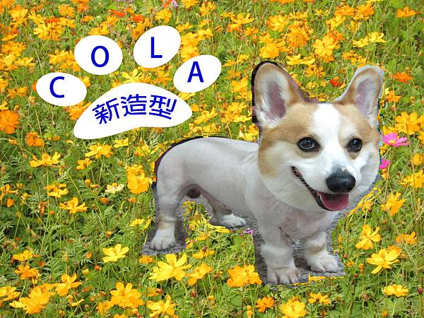 cola新造型.jpg