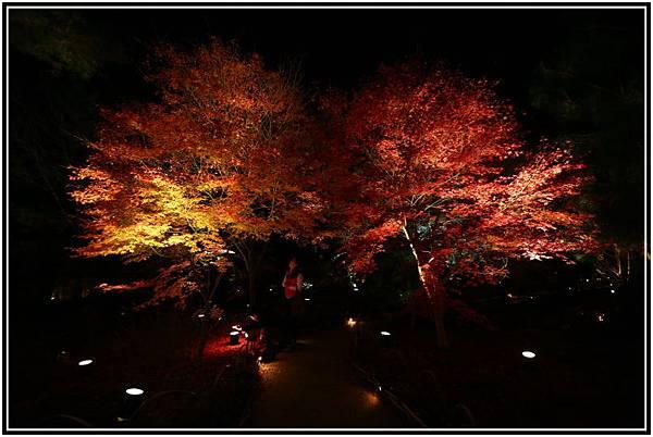 20151203H寶嚴院夜楓 002.JPG