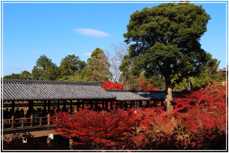 20151205BA東福寺169-1.JPG