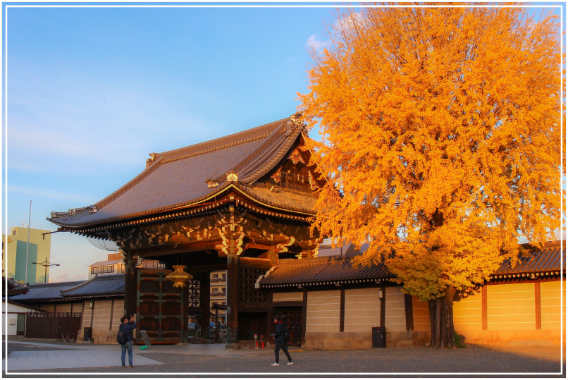 20151205DA西本願寺071-1