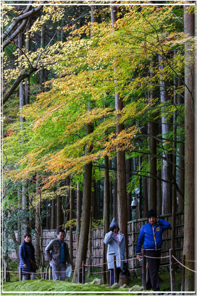 20151206BA銀閣寺163-1.jpg