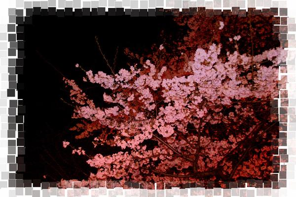 IMG_5544-o.jpg