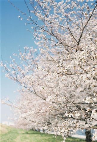 Spring is coming..jpg