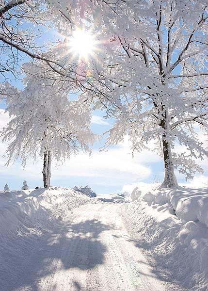 Snowy sunburst.jpg