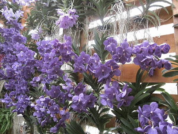2010Taipei Flora Expo 264.JPG