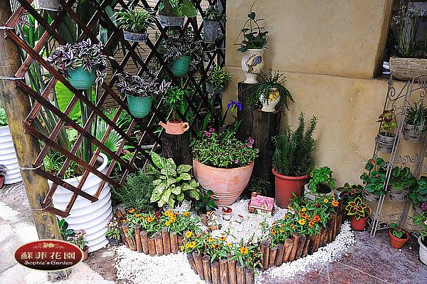 巷弄裡的小花園