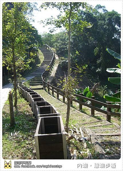 碧湖步道直CIMG1206-1.JPG