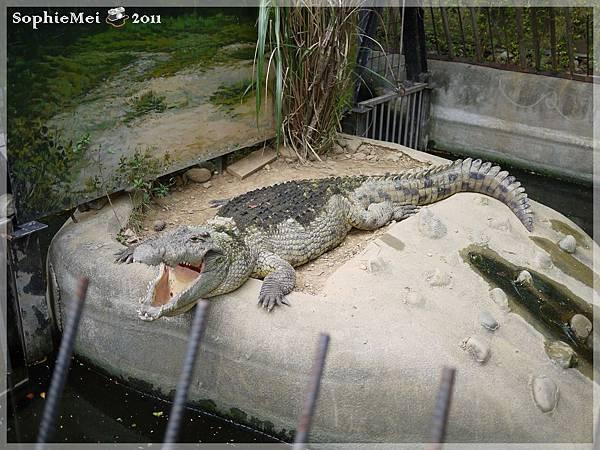 2Y-初訪動物園08.JPG