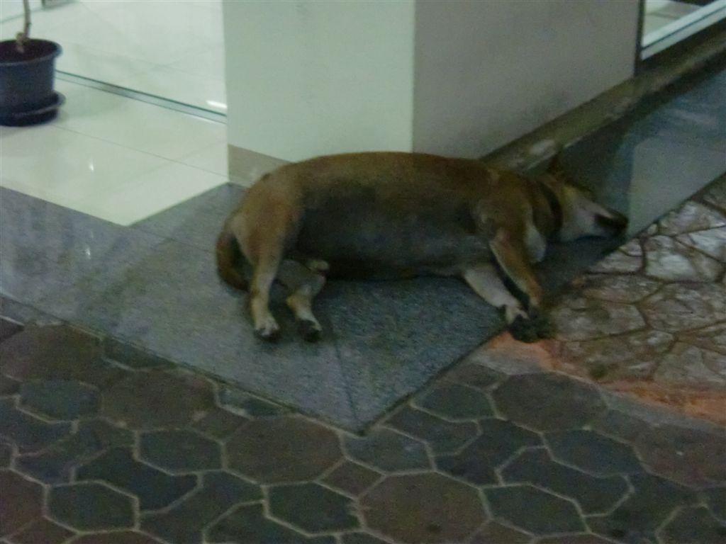 住宿的地方 一隻狗永遠在等我們