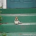 在拜碼頭的松鼠.jpg