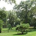 楓樹林.jpg
