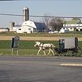 Amish馬車.jpg