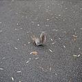 擋路的松鼠.jpg