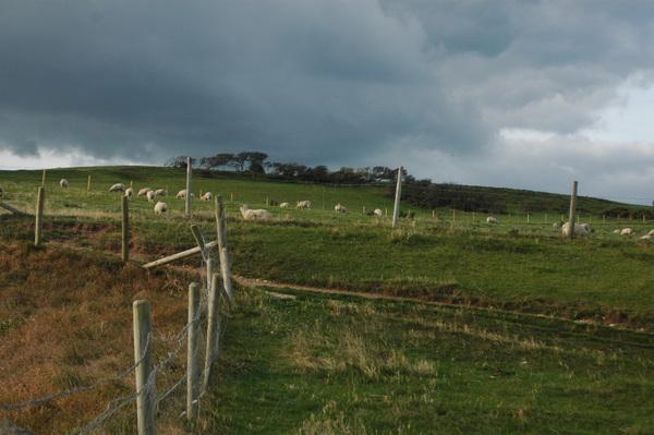 又是綿羊們