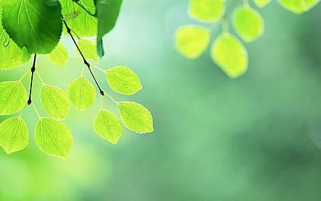 Fresh_green_leaves_JK186_350A