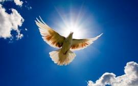 dove_bird_from_sky-t1