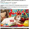 英國最長壽寵物狗22歲 從不吃狗食