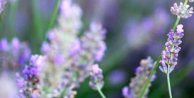 grasse_004
