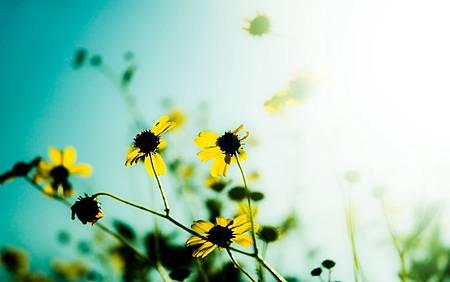 5613_flowers_hd_wallpapers