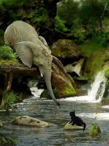 大象伸鼻救受困小貓