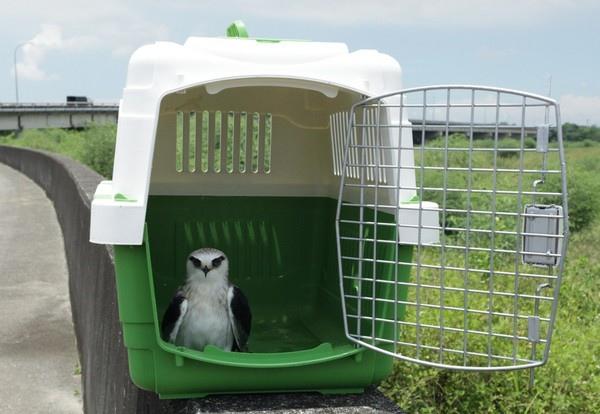 台南4隻受傷保育鳥康復野放