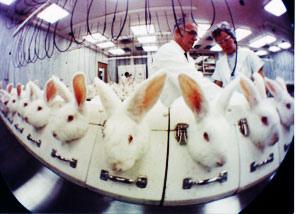 美麗的醜陋面--化妝品與動物實驗