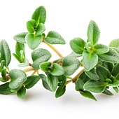 百里香 Thyme-leaves