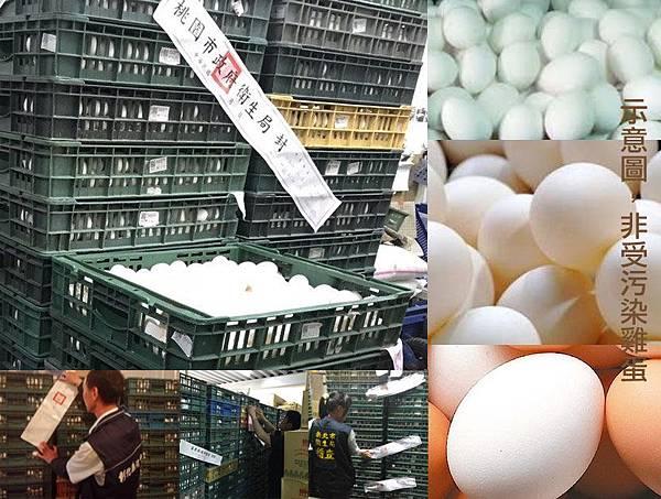 戴奧辛雞蛋事件新聞截圖