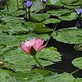三峽插角國小生態池