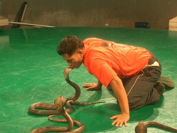 曼谷--皇家蛇園 (2).JPG
