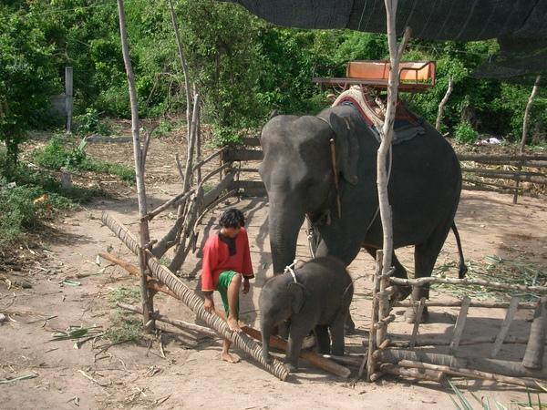 大象 (1).jpg