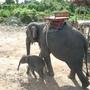 大象 (2).jpg