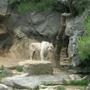 白老虎是白的
