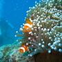 活動篇 (9) Nemo躲起來了.JPG