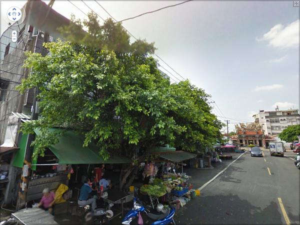 榕樹下.bmp
