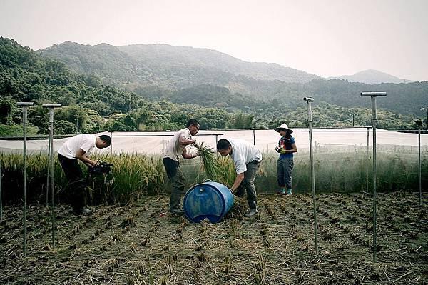 稻米是如何鍊成的