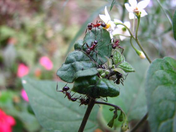螞蟻.jpg