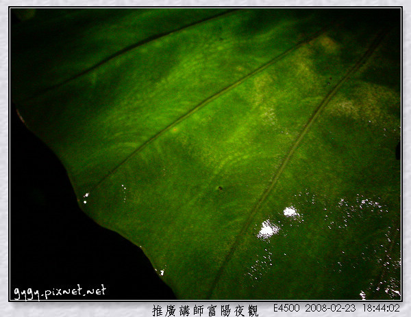 富陽夜觀153.jpg