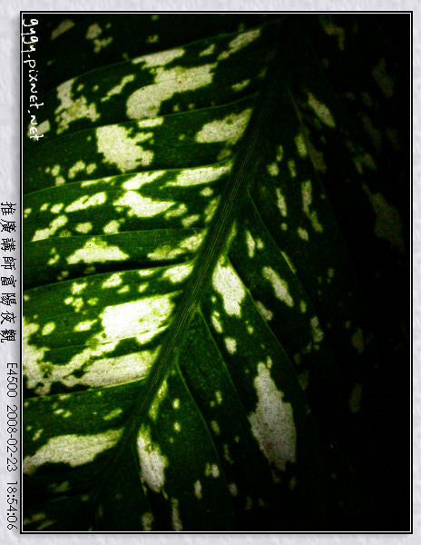 富陽夜觀162.jpg