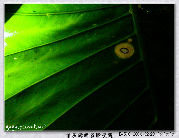 富陽夜觀174.jpg