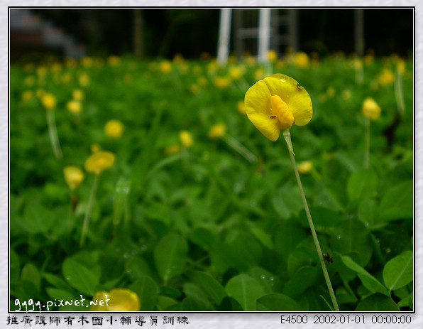 推廣講師_有木國小139.jpg