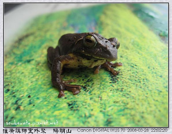 你在看我嗎(台北樹蛙).jpg