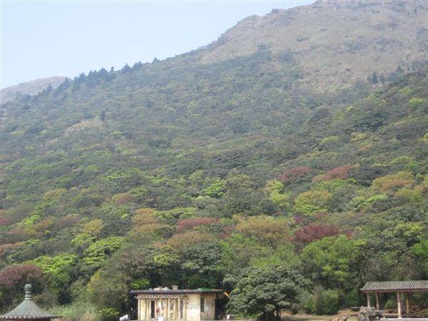 遠眺七星山 多樣性的混合林~.JPG