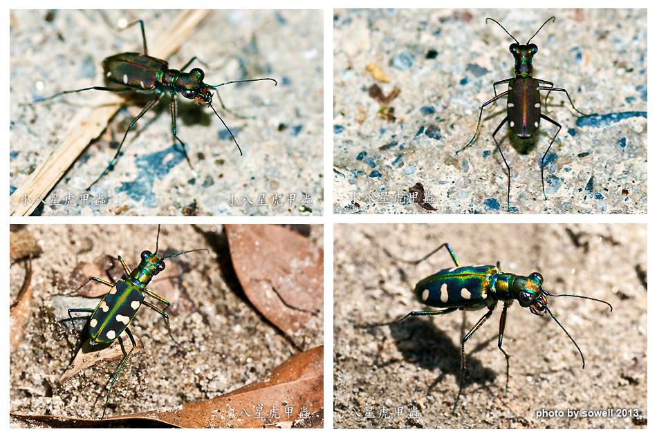 昆蟲生態-1.jpg