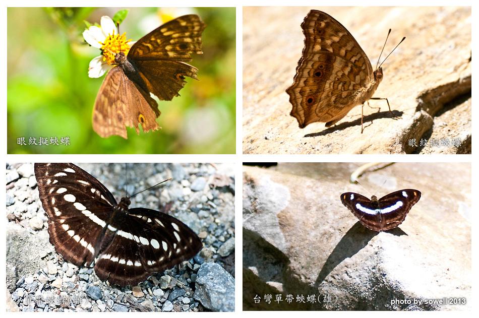 昆蟲生態-2.jpg