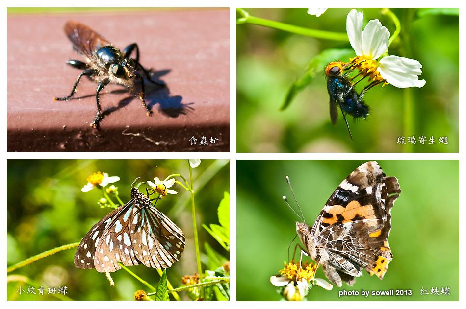 昆蟲生態-3.jpg
